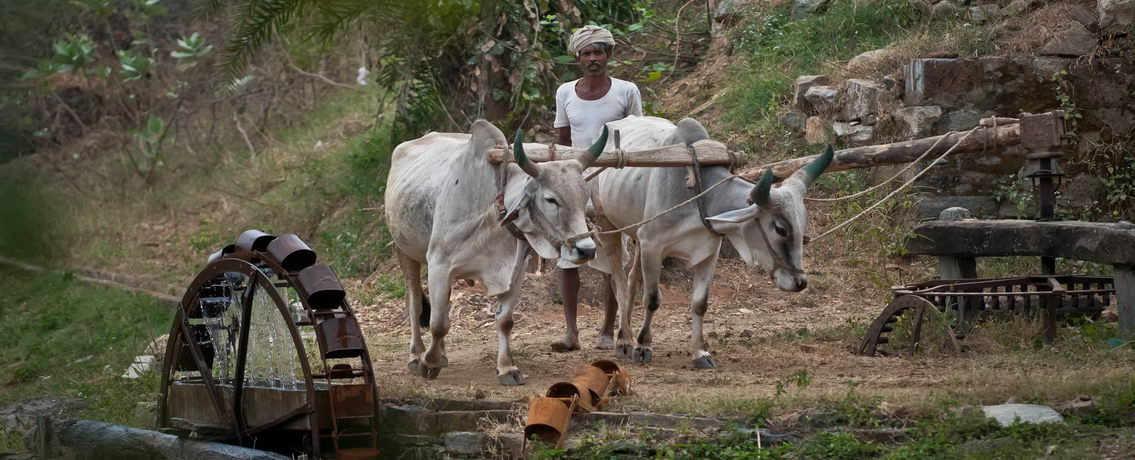Fermier-indien-Entete